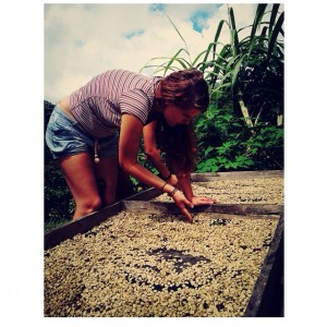 Spreading sun dried coffee beans
