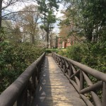 The Rustic bridge was donated by the class of 1902 and was where senior projects were initially presented.
