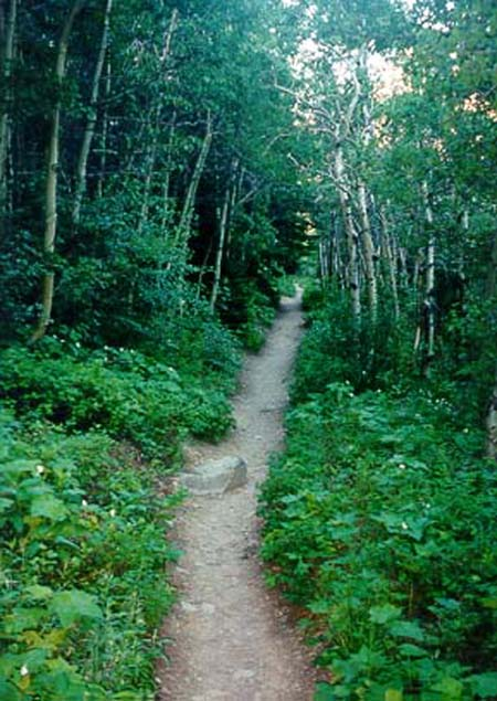 Hiking trails in Many Glacier, MT