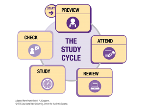 StudyCycle_rev15_notext-02
