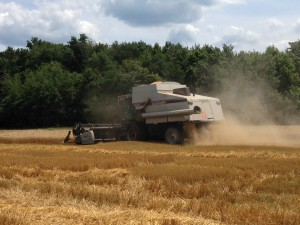 Harvesting wheat, Crawford County, PA.